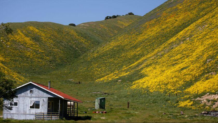 San Luis Obispo County, CA April 9, 2017: Wildflowers blanket the hillside of Temblor Ridge, in Ca