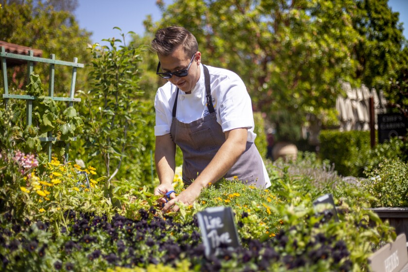 Christopher Gentile, chef de cuisine at the Rancho Bernardo Inn's Avant restaurant, is introducing a new once-a-week tasting menu build around produce grown in the resort's 3,000 square feet of gardens.