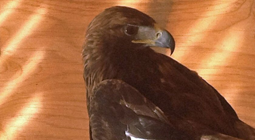 New Mexico bird-of-prey rescue center threatened by lack of funds