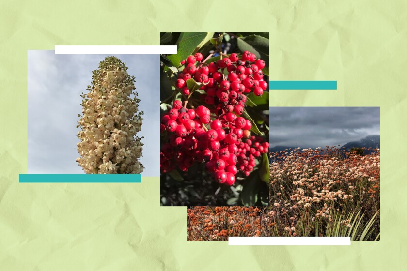 Illustration featuring three photos of native plants in their natural environment.