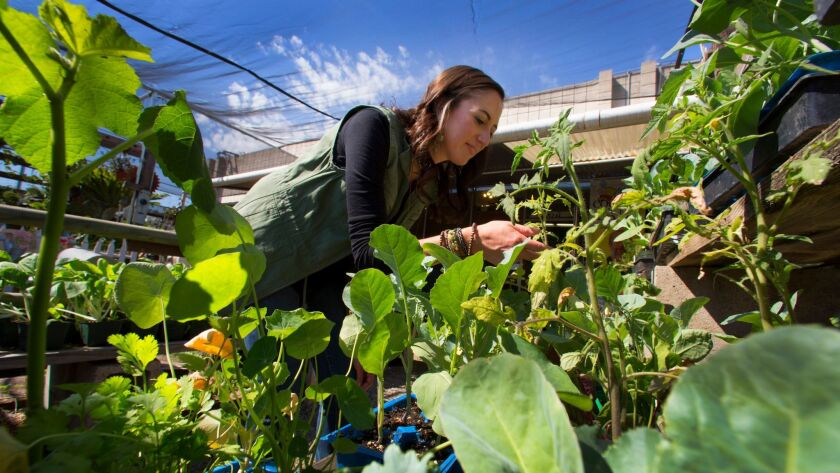 Stephanie Parker, co-founder of Epicurean leads groups on tours through local farms like City Farmers Nursery.