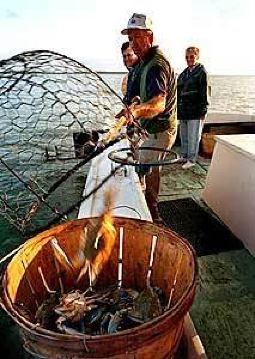Crabbing in the Chesapeake
