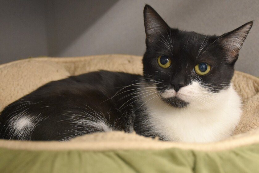 Pet of the week Helen Woodward Animal Care Center