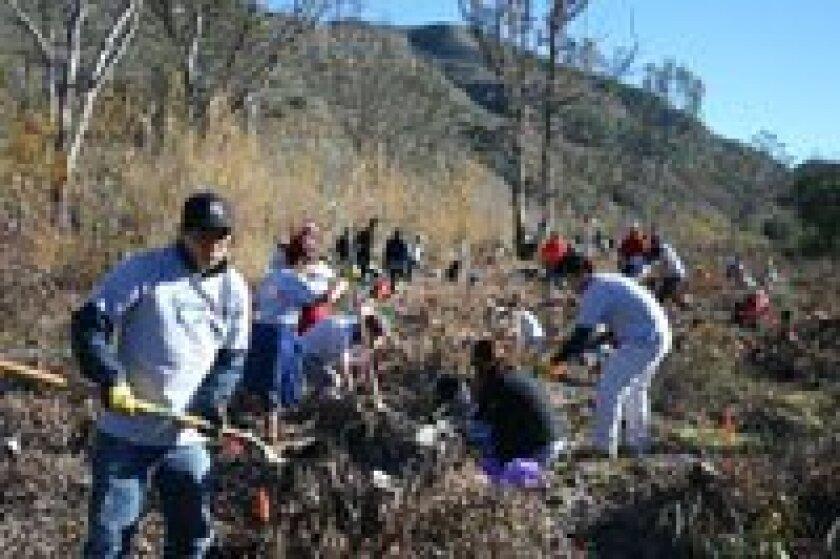 Tree Planting, Takeda California