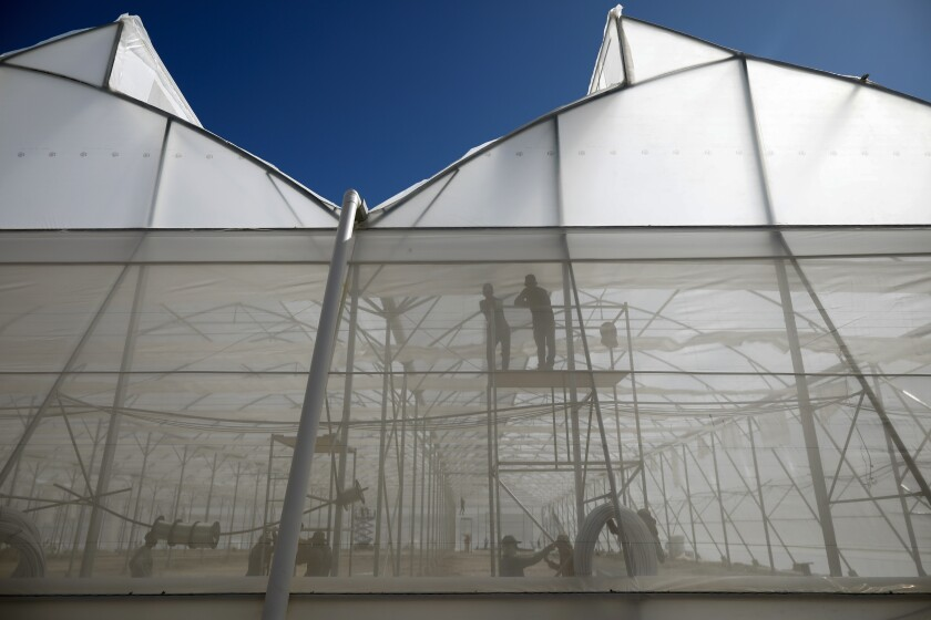 Workers build greenhouses for chili peppers and tomatoes for export, on the outskirts of the community of Las Tapias, San Marcos de Colon, Choluteca department, Honduras, Friday 30, July 2021, as part of special areas known as Employment and Economic Development Zones, or ZEDEs. The construction began in January, but it wasn't until June when locals learned their community was part of a highly controversial government initiative creating semi-autonomous economic development zones that are exempt from many national laws and taxes. (AP Photo/Elmer Martinez)