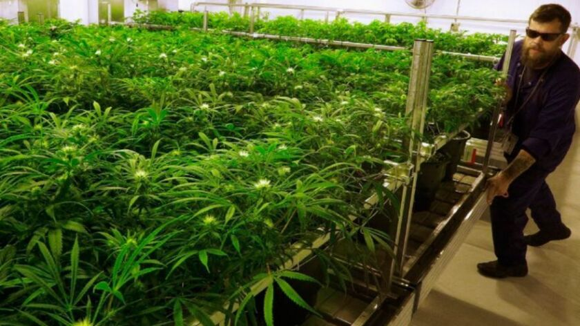 San Diego marijuana REIT Innovative Industrial Properties goes public but its shares fall in early trading