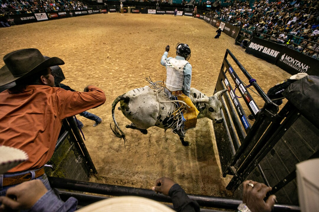 A bull and rider exit the bucking chute at the Bill Pickett Invitational Rodeo.