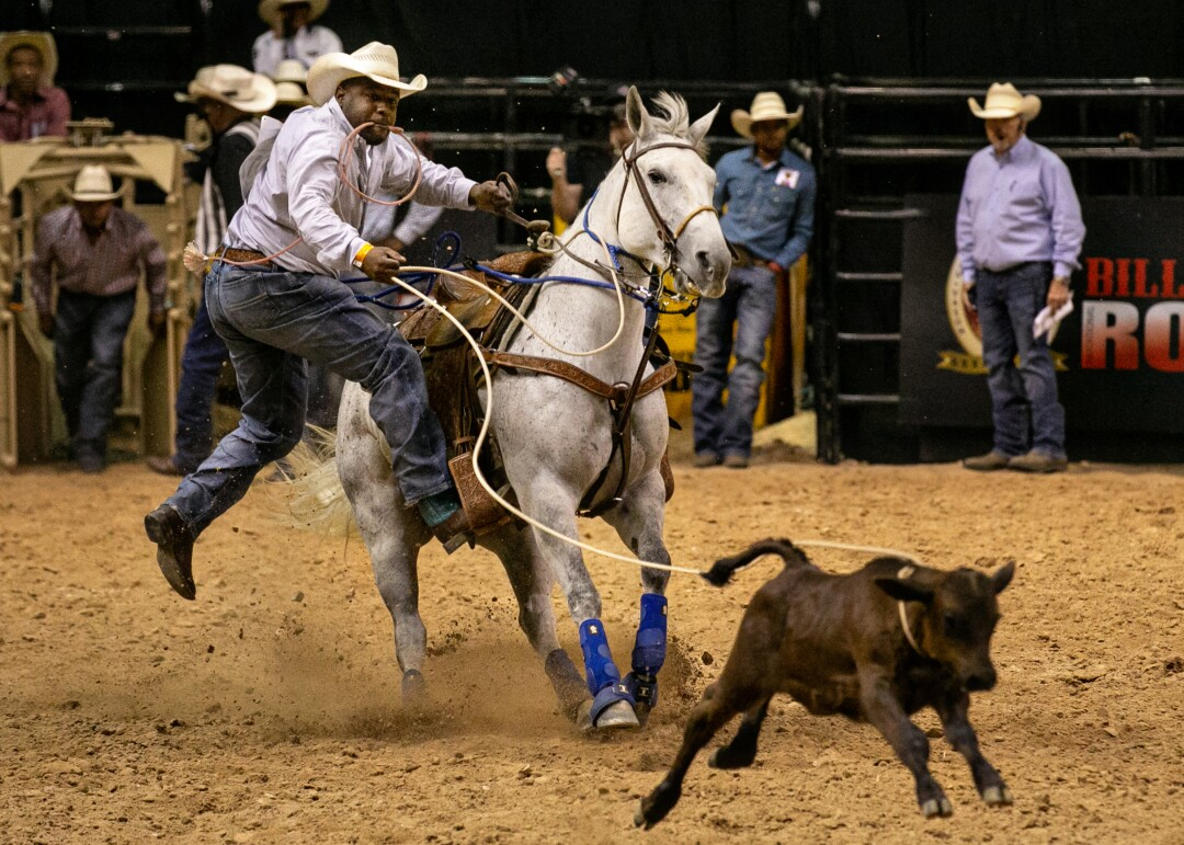 A cowboy jumps off his horse and runs after a lassoed calf in the calf roping competition.