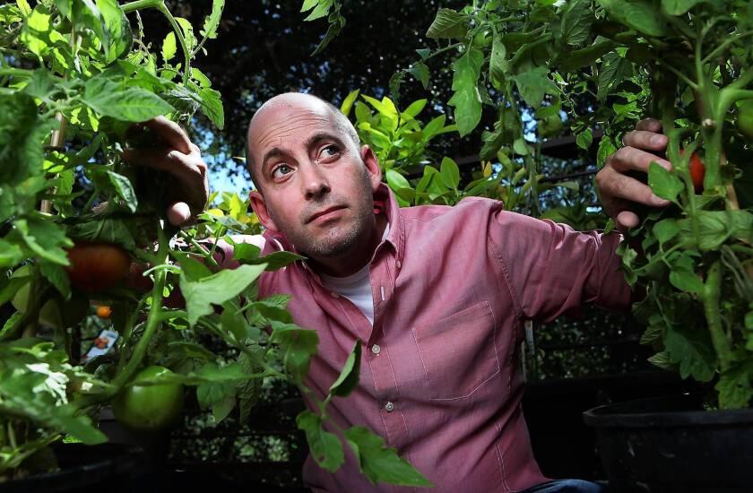 """Turbo"" director David Soren among his backyard tomato plants in Sherman Oaks."