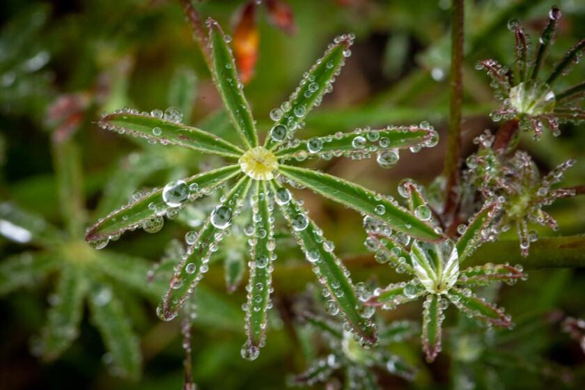 Dew drops and fog make the forest a magical place.