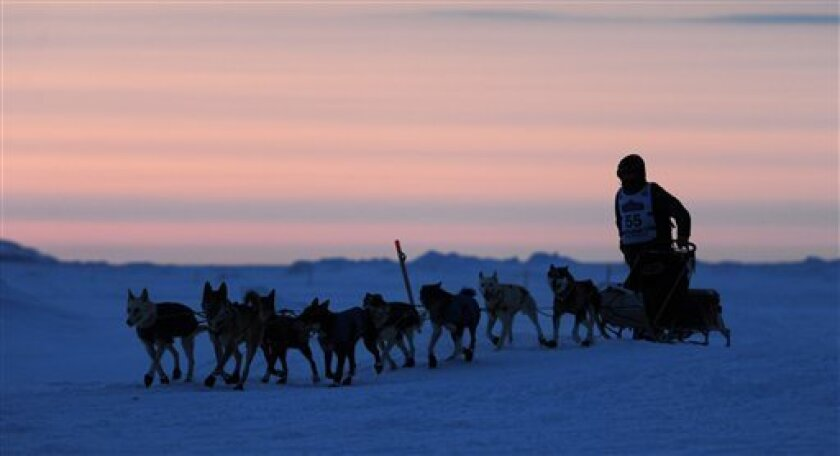 Josh Cadzow  nears Nome, Alaska, during the finish of the Iditarod Trail Sled Dog Race on Wednesday morning, March 13, 2013. (AP Photo/The Anchorage Daily News, Bill Roth)