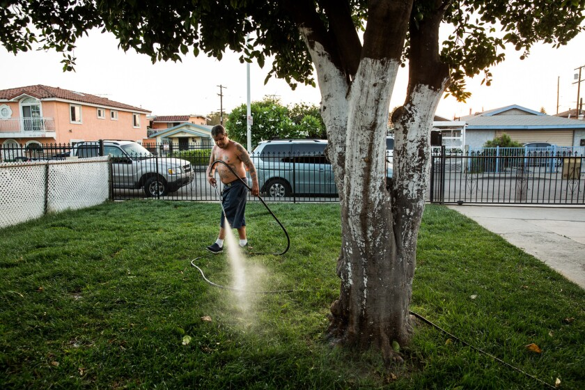 A man waters his new lawn in August after the California Department of Toxic Substances Control replaced the soil. Lead contamination had been found on his Boyle Heights property.