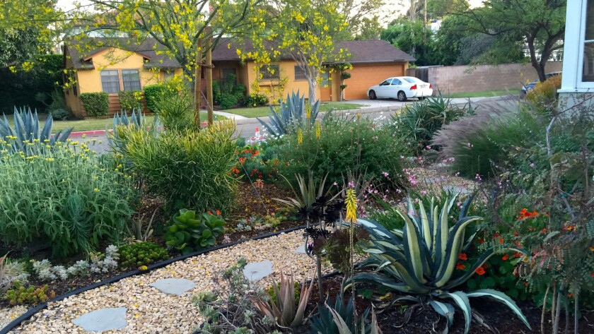 California Gold paths are lined with agaves, succulents and salvia.