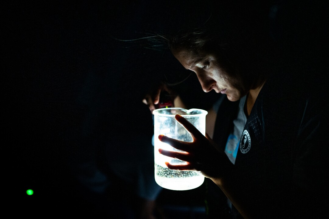 Katie Senft, associate specialist for the UC Davis Tahoe Environmental Research Center, counts mysis shrimp collected in Lake Tahoe near Tahoe City, Calif.