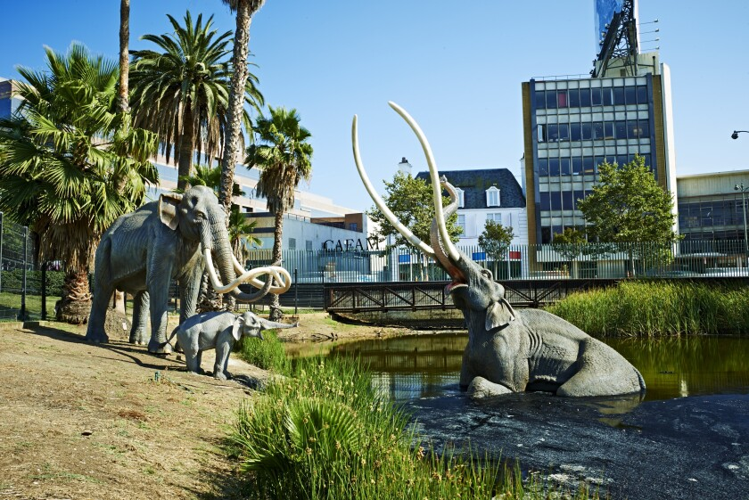 A Columbian mammoth scene in the Lake Pit at the La Brea Tar Pits in Los Angeles.