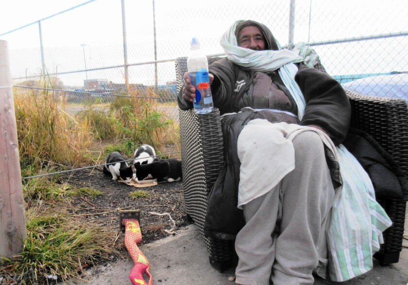 For nearly a decade, Eshete Woldeyilma has sat in the same spot near the Brooklyn waterfront every day to tend to a colonoy of feral cats.