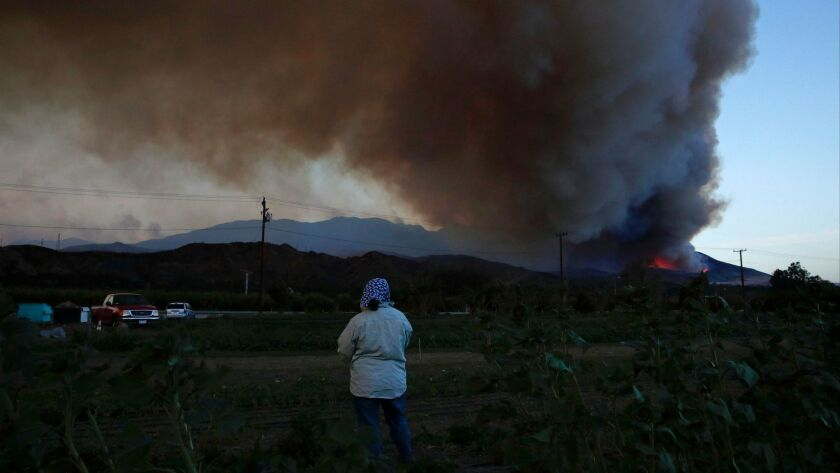 Farmworker Maria Carlines watches a plume of smoke from the Thomas fire on Dec. 7 in Santa Paula.