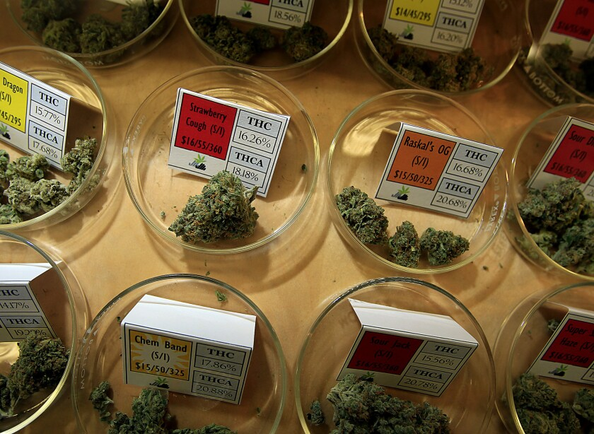 Medical marijuana at Harborside Health Center
