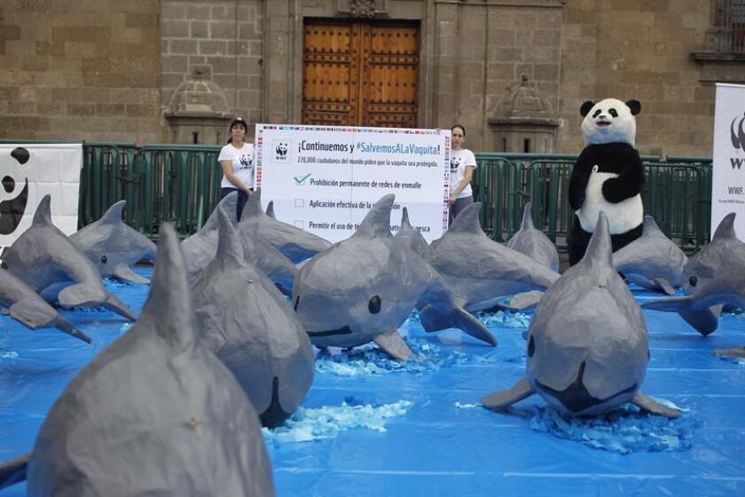 Foto de archivo de una instalación para pedir al gobierno mexicano que se implementen acciones urgentes para la protección de la vaquita marina rl sábado 7 de julio de 2017. EFE/Archivo