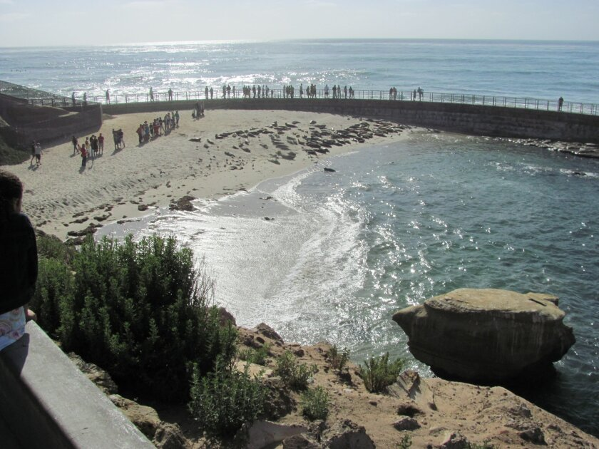 La Jolla's casa Beach is also known as the children's Pool and has been occupied primarily by seals for years.
