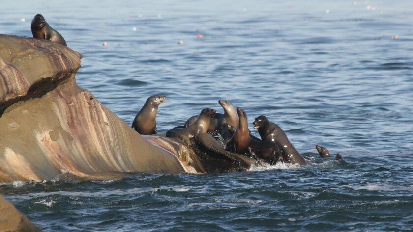 Sea-lions-cove-6