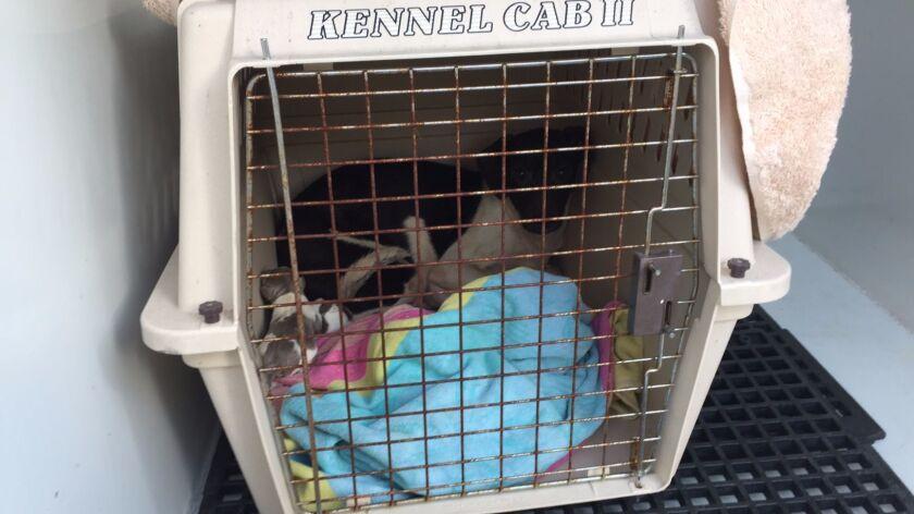 El Cajon dogs rescued
