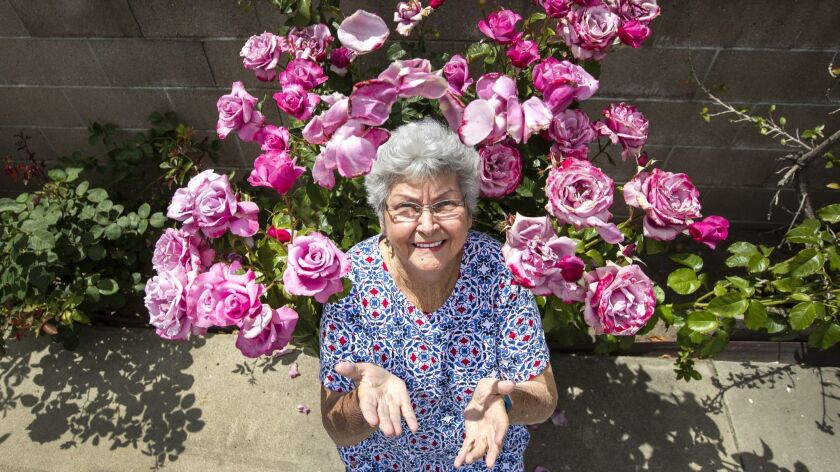 ONTATIO, CA-MAY 2, 2019: Maxine Gilliam is photographed next to a rose bush named, Barbra Streisand
