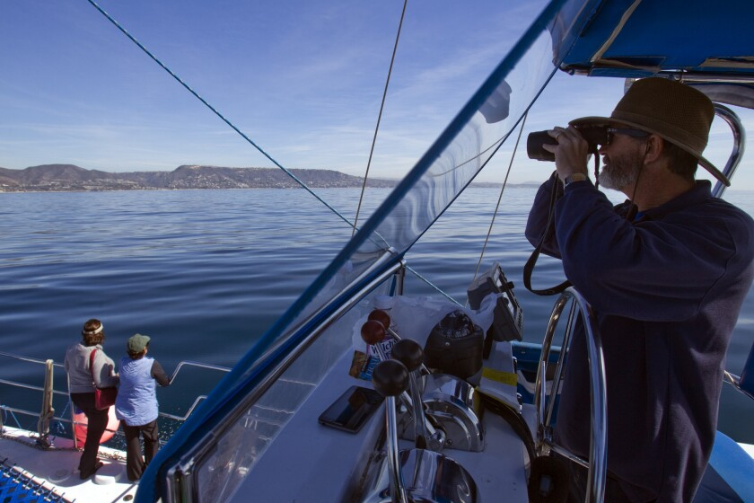 Captain Dave Anderson uses binoculars to spot migrating whales, as tourists also keep watch aboard Anderson's Dolphin and Whale Safari 35-foot catamaran off Dana Point.