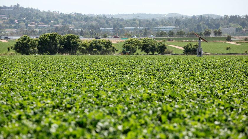 A strawberry farm near the interchange of the 5 and 405 freeways is now the site planned for Orange County's veterans cemetery.