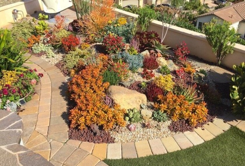 Adding materials like humus or Perlite to plant beds will promote drainage and help succulents withstand the soaking rains of El Niño.