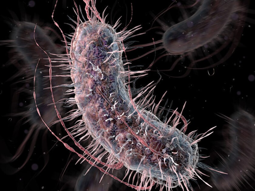 Talented bacteria detect cancer, diabetes
