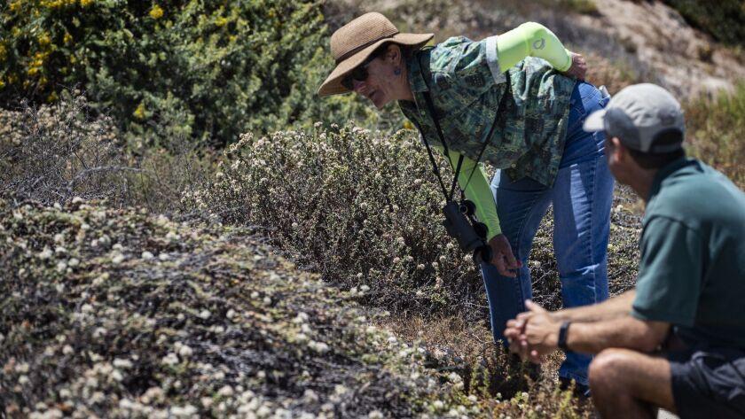 REDONDO BEACH, CA - JULY 14, 2018: Biologist Ann Dalkey and native habitat enthusiast Jim Montgomer