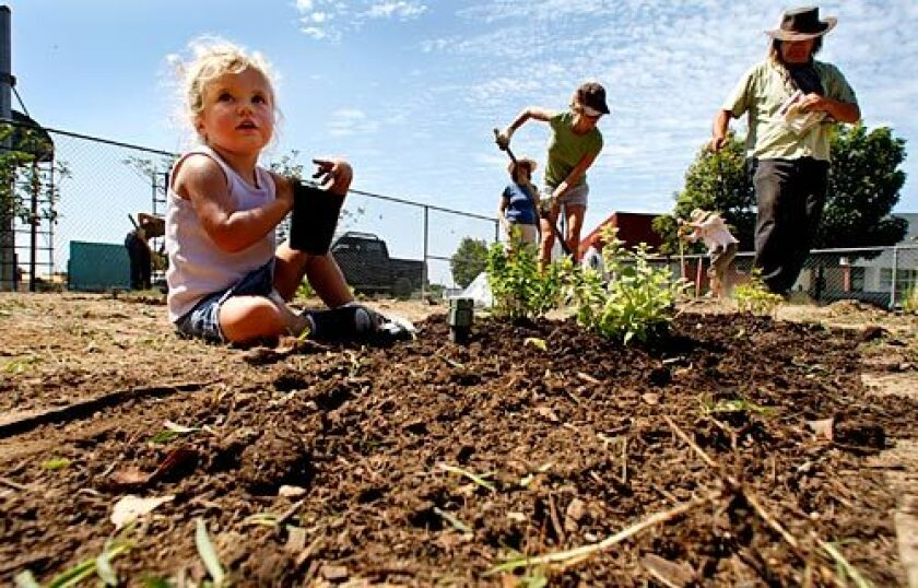 Ava Allred, 2, helps during a volunteer gardening day at Farragut Elementary School in Culver City.