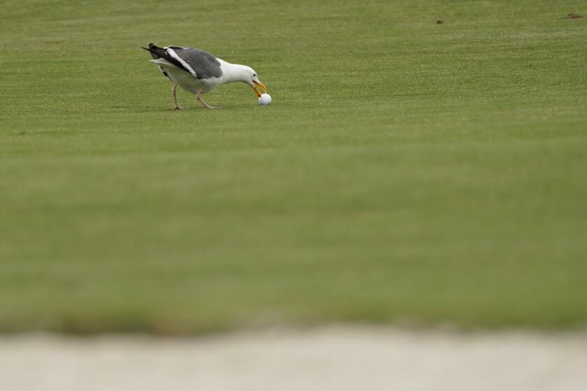 APphoto_US Open Golf