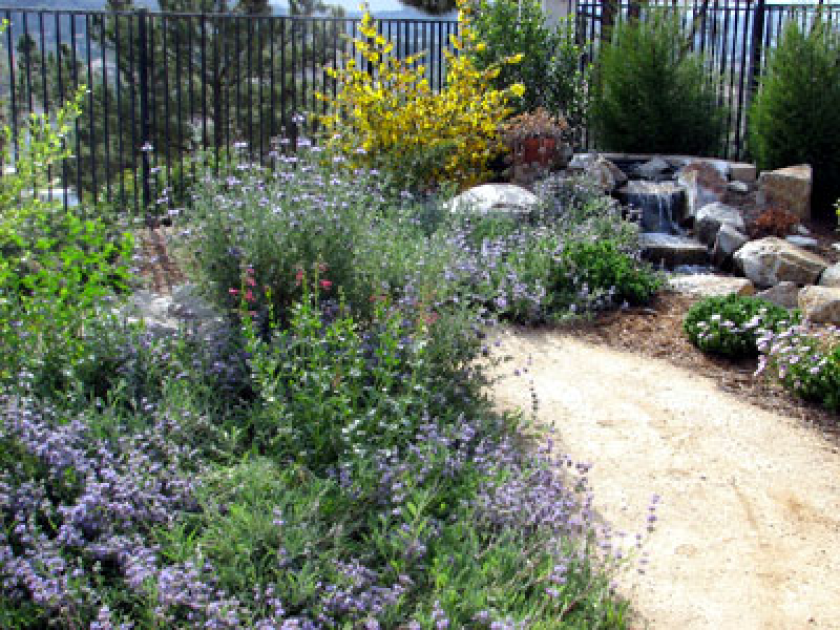 California native plants provide drought-tolerant beauty to any landscape, as well as habitat for birds and butterflies.