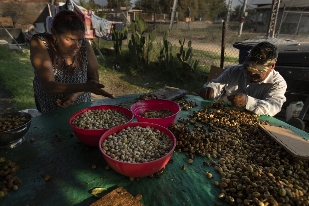 Stratford residents Estella Lopez, left, and husband Francisco, right, peel the outer hulls off pistachio nuts