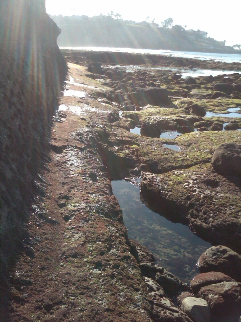 The beach trail below Princess Street. Photo: Audrey D. Keane