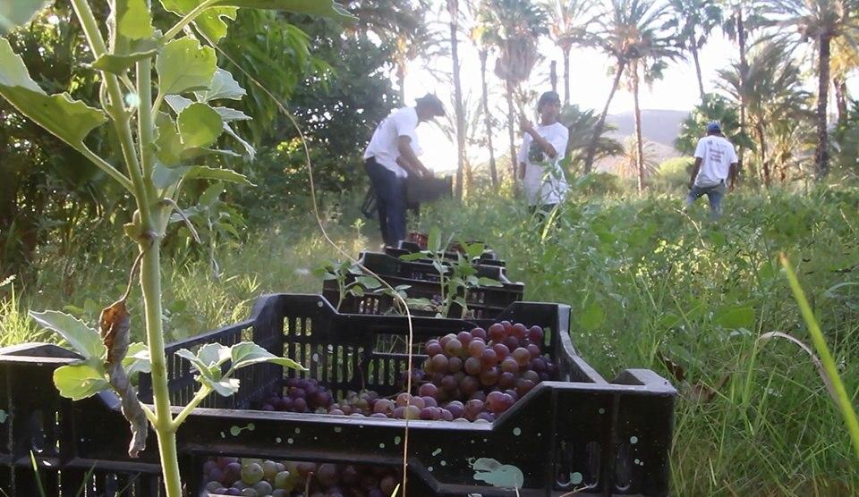 Ubicada en las faldas de la sierra La Giganta, la comunidad goza de un rico entorno natural en forma de oasis donde crece la uva llamada misión, que los habitantes de la zona buscan catalogar con denominación de origen.