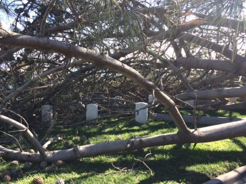 The tree fell on top of several graves but managed to miss every tombstone.