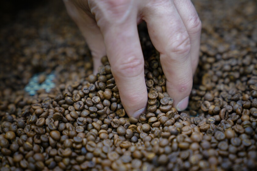 Founder of Steady State Roasting Co., Elliot Reinecke inspects a small batch of freshly roasted coffee beans that helped the company win the 2020 Good Food Award.