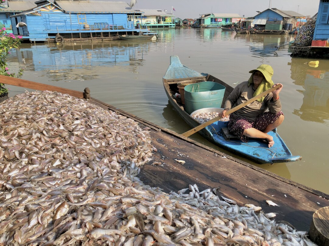 Fisherwoman in Kampong Luong Cambodia