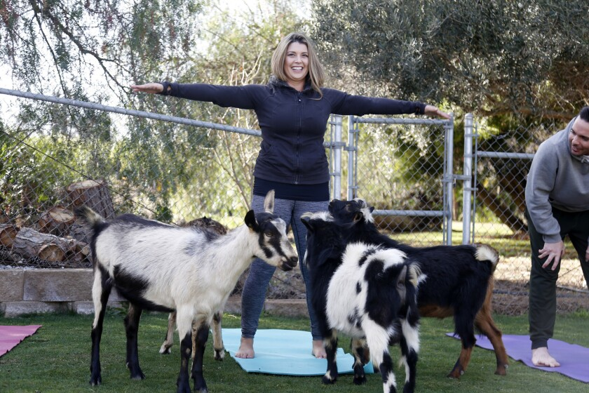 Blind daters Ashley and Kyle enjoyed yoga with goats at the Blissful Goat.