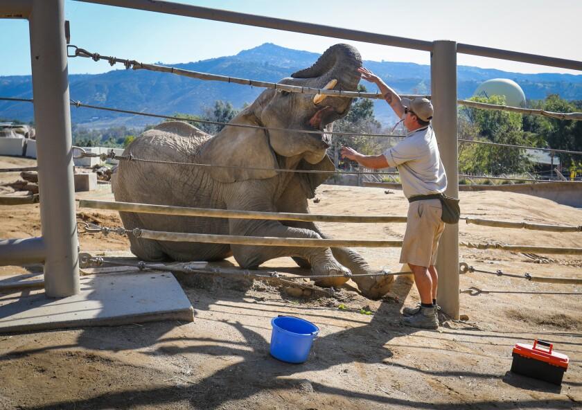481631_sd_me_elephants_captivity_HL_