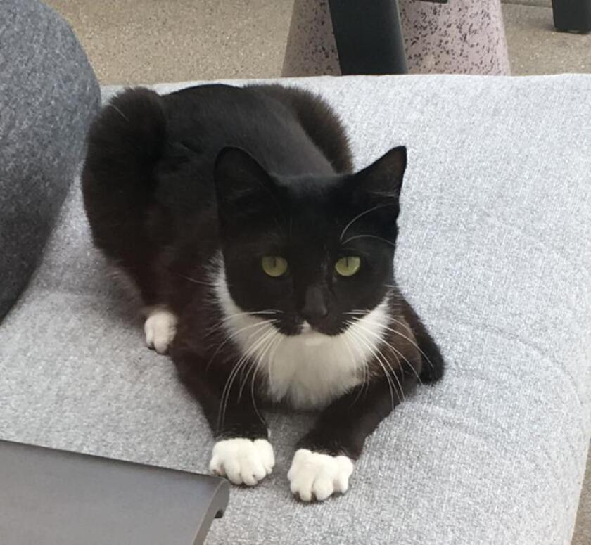 Do you recognize this cat?