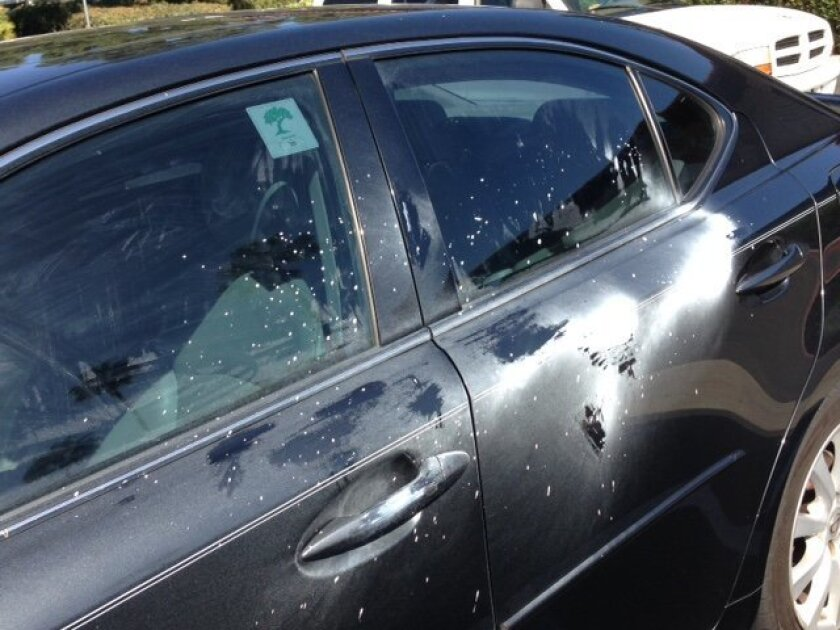 Madeline Hoeg's car was spattered with paint. Courtesy photo
