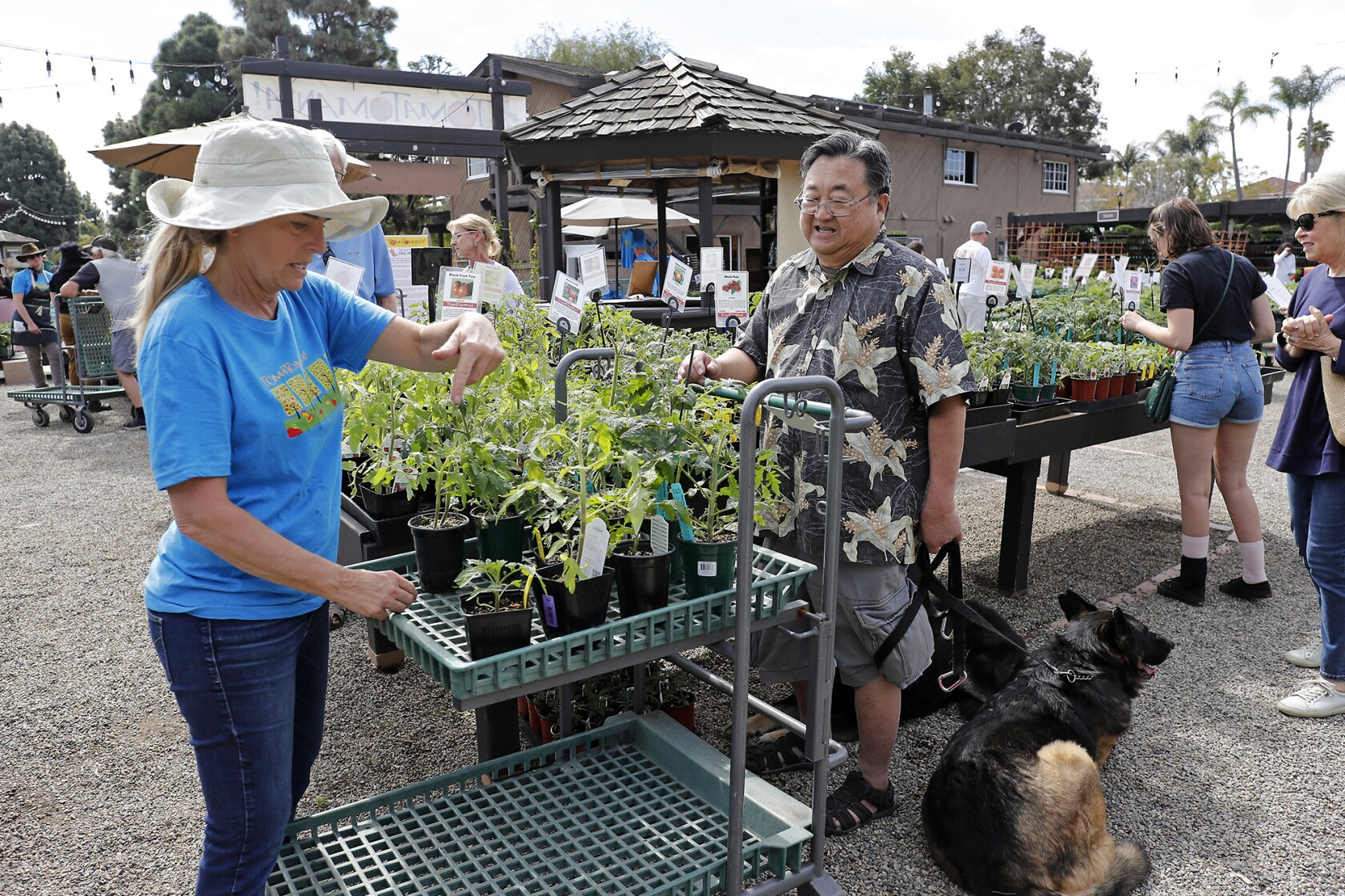 Tomatomaniacs welcome at Roger's Gardens plant sale