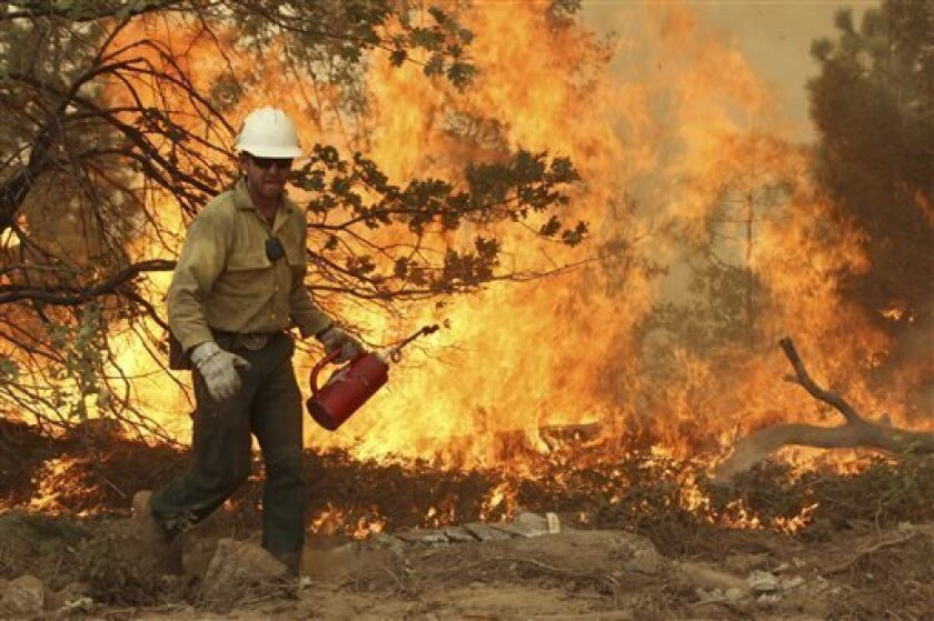 This Friday, Aug. 30, 2013 image provided by the U.S. Forest Service shows a member of the BLM Silver State Hotshot crew using a drip torch to set back fires on the southern flank of the Rim Fire in California. The blaze has scorched 343 square miles of brush, oaks and pines and 11 homes, as of Sat