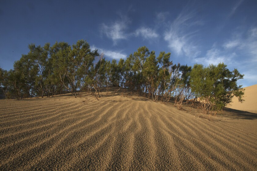 Free entry to Death Valley National Park on Saturday, where you can visit the Mesquite Flat Sand Dunes.