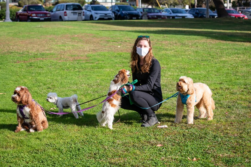 Madison Parker walks Billie, Charlie, Lucy and Bodi at Fanuel Street Park in Pacific Beach.