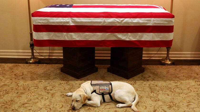 This Sunday, Dec. 2, 2018 photo, Sully, President George H.W. Bush's service dog lies in front of hi